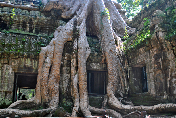 Ta Phrom, one of the Temples of Angkor, Cambodia