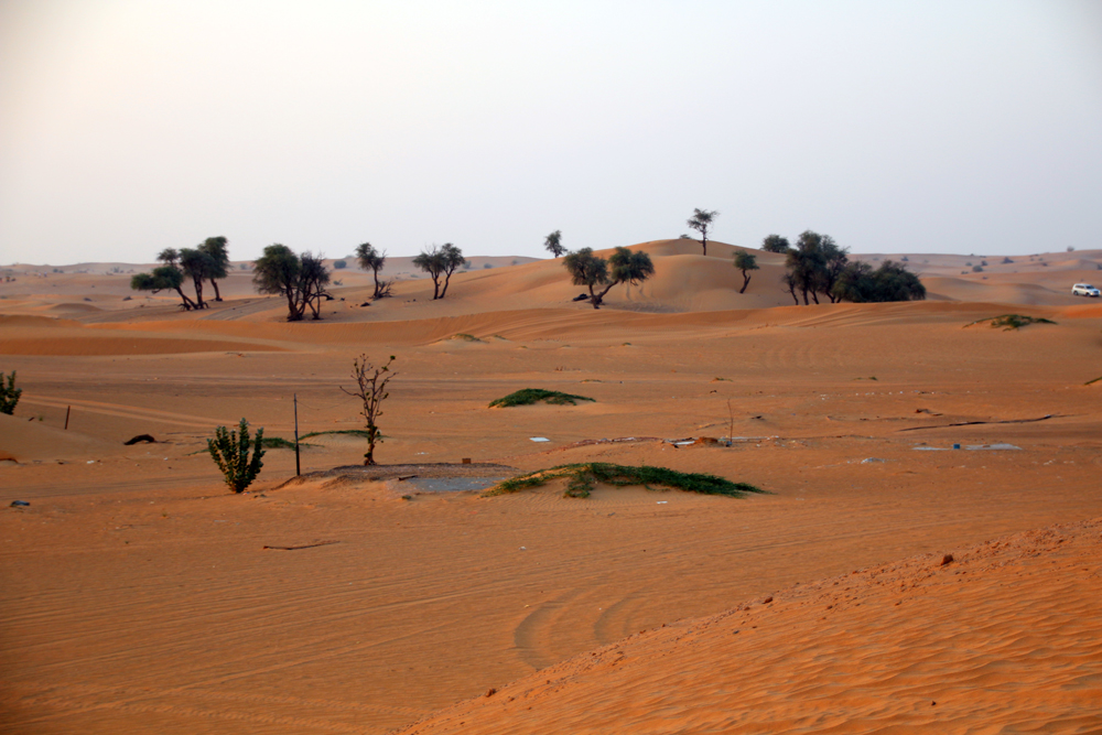 Desert of Sharjah United Arab Emirates Middle East