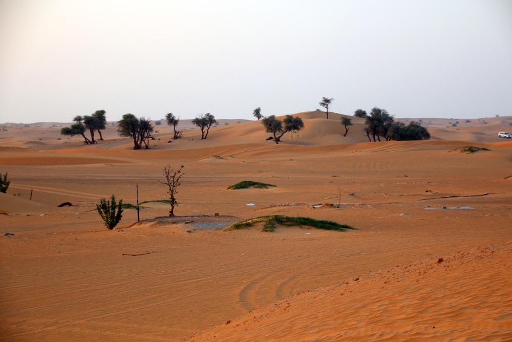 Wüste in Sharjah Vereinigte Arabische Emirate Naher Osten