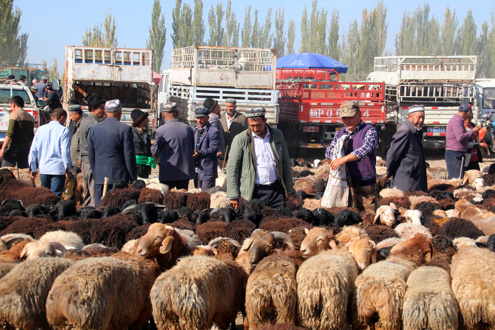 Tierbasar Kashgar China Asien
