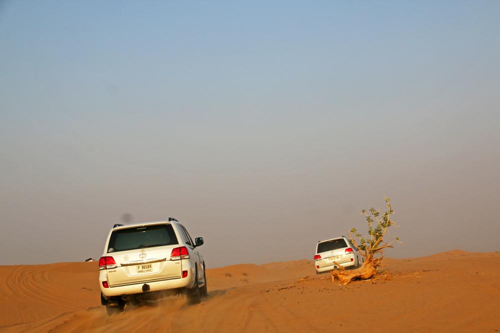 Eine Wüstensafari in Schardscha - Dune Bashing